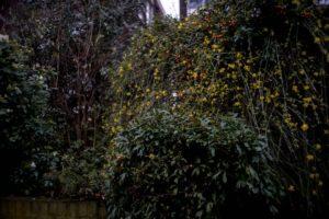 A botanic garden