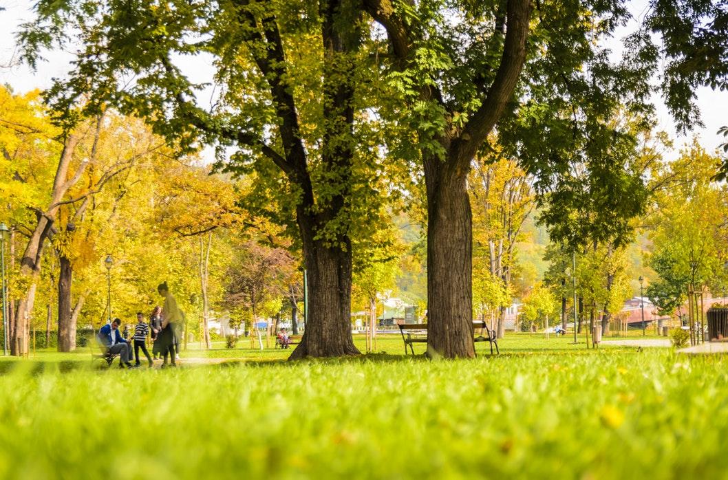 A park.