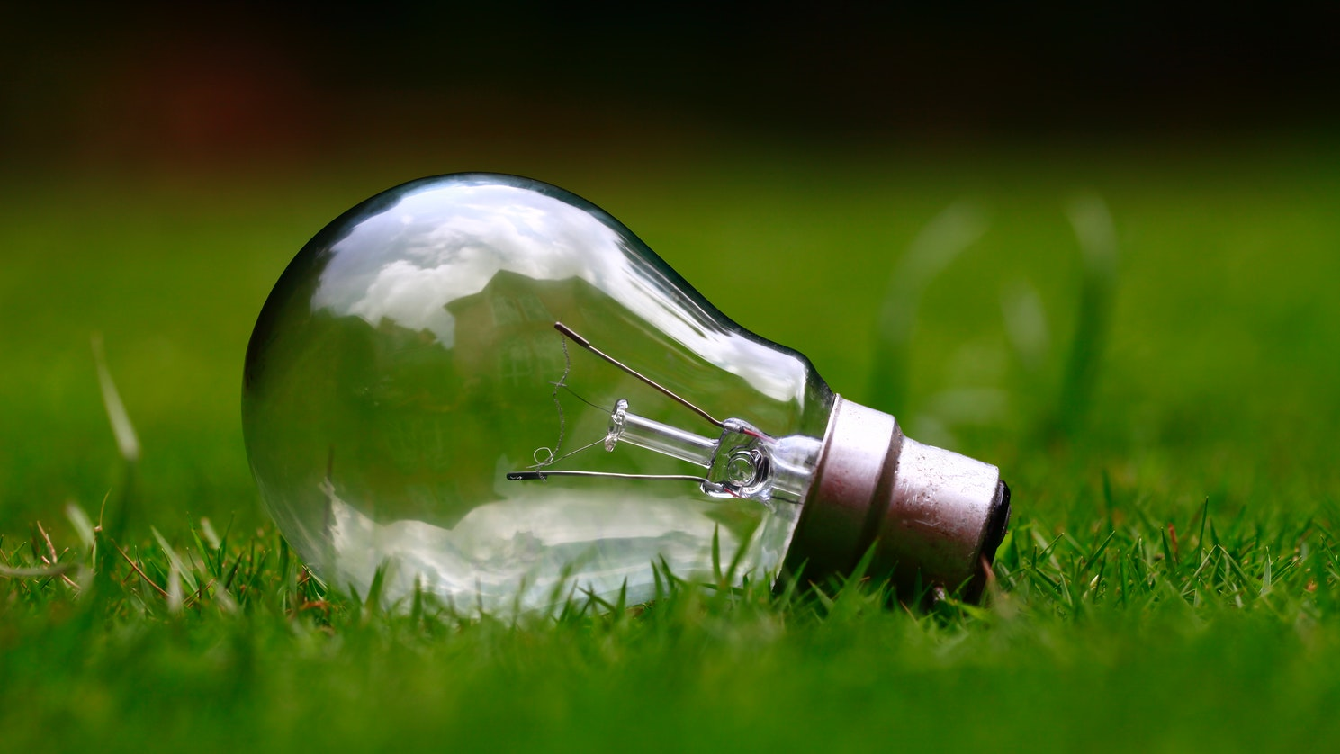 A light bulb sitting in grass.