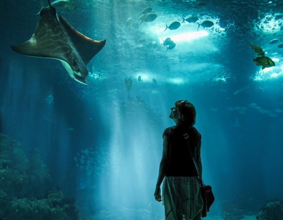 An aquarium's indoor attractions.