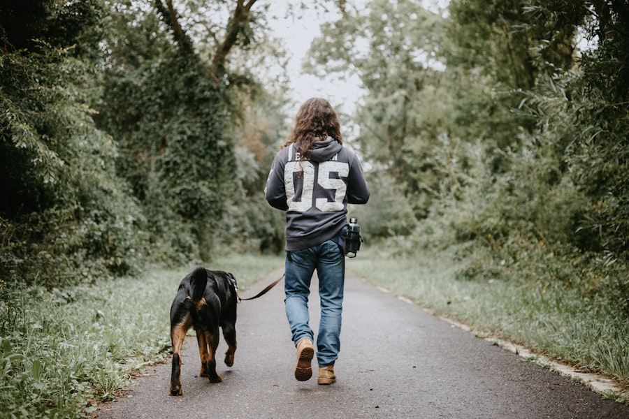 Person walking dog and staging with pets